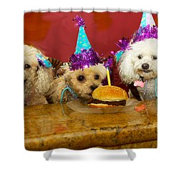 Dog Party Shower Curtain