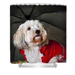 Dog Under Umbrella Shower Curtain by Elena Elisseeva
