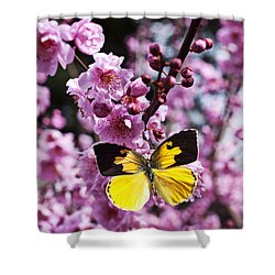 Dogface Butterfly In Plum Tree Shower Curtain by Garry Gay