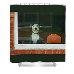 Doggie In The Window Shower Curtain by Lenore Senior