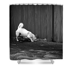 Doggy Detective Shower Curtain
