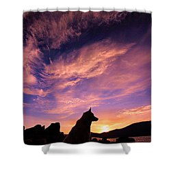 Dogs Dream Too Shower Curtain by Sean Sarsfield