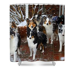 Dogs During Snowmageddon Shower Curtain