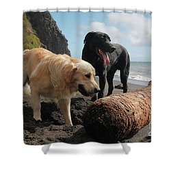 Dogs Playing At The Beach Shower Curtain by Gaspar Avila