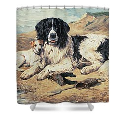 Dogs Watching Bathers Shower Curtain by John Emms