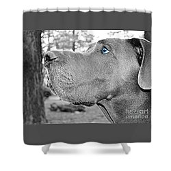 Dogus Shower Curtain