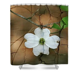 Dogwood Bloom Shower Curtain by Cathy Harper