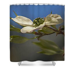 Shower Curtain featuring the photograph Dogwood Bloom by Elsa Marie Santoro