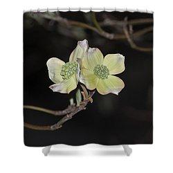 Dogwood Blooms Shower Curtain by Elsa Marie Santoro