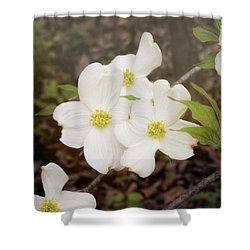 Dogwood Blossom Trio Shower Curtain
