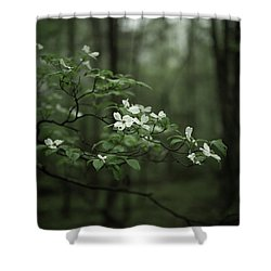 Shower Curtain featuring the photograph Dogwood Branch by Shane Holsclaw
