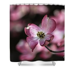 Shower Curtain featuring the photograph Dogwood  by Brenda Bostic