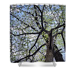Dogwood Canopy Shower Curtain