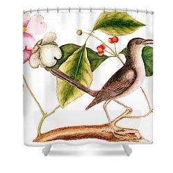 Dogwood  Cornus Florida, And Mocking Bird  Shower Curtain by Mark Catesby