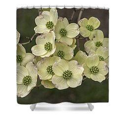 Dogwood Dance In White Shower Curtain by Don Spenner