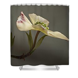 Shower Curtain featuring the photograph Dogwood by Elsa Marie Santoro