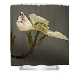 Dogwood Shower Curtain by Elsa Marie Santoro