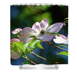 Dogwood Flowers Shower Curtain by Ronda Ryan