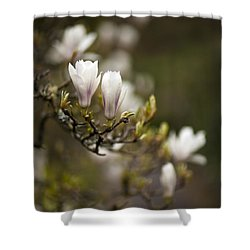 Dogwood Gathering Shower Curtain by Mike Reid