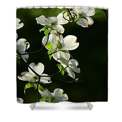 Dogwood Retrospective Shower Curtain by Michael Dougherty