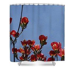 Dogwood Shower Curtain