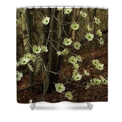 Shower Curtain featuring the photograph Dogwoods In The Spring by Mike Eingle
