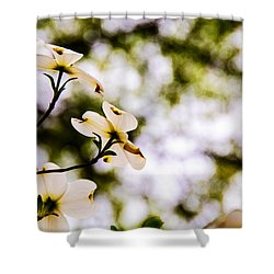 Dogwoods Under The Pines Shower Curtain