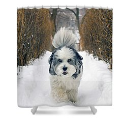 Doing The Dog Walk Shower Curtain by Keith Armstrong