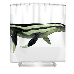 Dolichorhynchops Plesiosaur On White Shower Curtain by Corey Ford