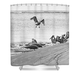 Dolphin And Pelican Party Shower Curtain