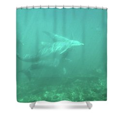 Shower Curtain featuring the photograph Dolphin Swim by Francesca Mackenney