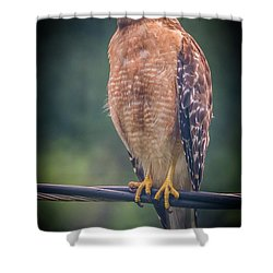Shower Curtain featuring the photograph Dominique The Hawk by Michael Sussman