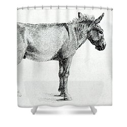 Donkey Shower Curtain by George Stubbs