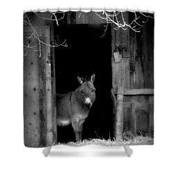 Donkey In The Doorway Shower Curtain