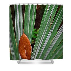 Shower Curtain featuring the photograph Don't Leaf by Donna Bentley