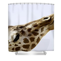 Don't Play With Your Food Shower Curtain by Anne Rodkin
