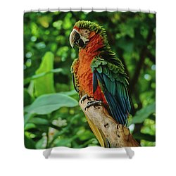 Shower Curtain featuring the photograph Don't Ruffle My Feathers by Marie Hicks