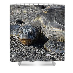 Shower Curtain featuring the photograph Don't Wake Me Up by Pamela Walton