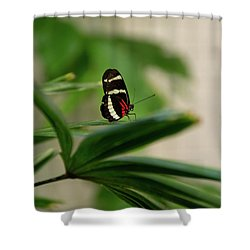 Doris Longwing Butterfly Shower Curtain