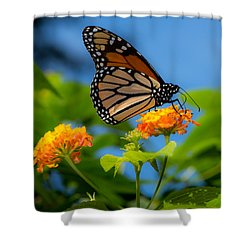 Dote Shower Curtain by Don Spenner