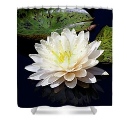 Dotty White Lotus And Lily Pads 0030 Dlw_h_2 Shower Curtain