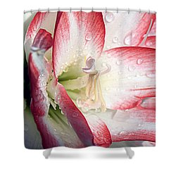 Double Amaryllis Shower Curtain