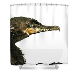 Shower Curtain featuring the photograph Double-crested Cormorant  by Robert Frederick