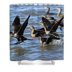 Double Crested Cormorants Shower Curtain by Louise Heusinkveld