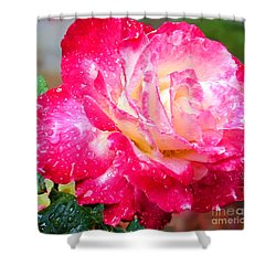 Shower Curtain featuring the photograph Double Delight by Patricia Griffin Brett