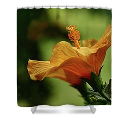 Double Grace Shower Curtain