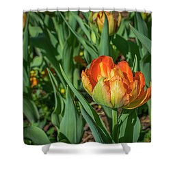 Double Multicolor Tulips Shower Curtain