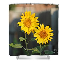 Double Sunflowers 2  Shower Curtain