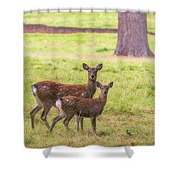 Shower Curtain featuring the photograph Double Take by Scott Carruthers