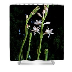 Double Tuberose In Bloom Shower Curtain